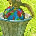Gazing Rainbow Ball Squirrel