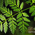 Gereric Vegetation by Carlos Caetano