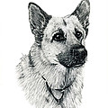 German Shepherd by Terri Mills