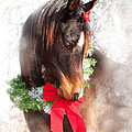 Gift Horse by Sari ONeal