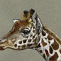 Giraffe Head Study by Juan  Bosco