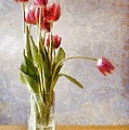 Glass vase with pink tulips