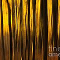 Golden Blur Print by Anne Gilbert