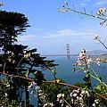 Golden Gate Bridge And Wildflowers by Carol Groenen