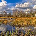 Golden Grasses by Debra and Dave Vanderlaan