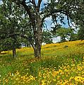 Golden Hillside by Robert Anschutz