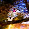 Golden Light Hummingbird Flight Print by Jeanette Brown