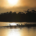 Golden Morning On Ding Darling by Steven Ainsworth