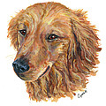 Golden Retriever by Barb Capeletti