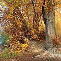 Golden Riverbank by Carol Groenen