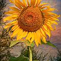 Golden Sunflower Print by Adrian Evans
