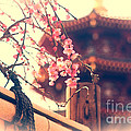 Gorgeous Pagoda And Plum Blossoms With Bamboo Fence by Beverly Claire Kaiya