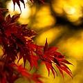 Graceful Leaves by Mike Reid