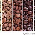 Grades Of Coffee Roasting by Jane Rix