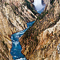 Grand Canyon of Yellowstone Print by Bill Gallagher