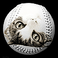 Grand Kitty Cuteness Baseball Square B W by Andee Design