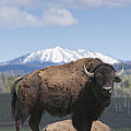 Grand Tetons Bison by Charles Warren