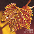 Grapevine In Fall by Artist and Photographer Laura Wrede