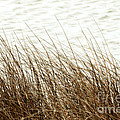 Grass Down By The Shore Of Virginia Beach by Artist and Photographer Laura Wrede