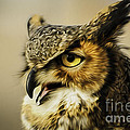 Great Horned Owl by Julieanna D