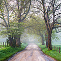 Great Smoky Mountains National Park Cades Cove Country Road by Dave Allen