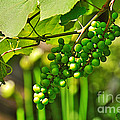 Green Berries by Kaye Menner
