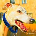 Greyhound Painting by Iain McDonald