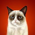 Grumpy Cat by Olga Shvartsur