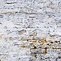 Grunge Wall by Elena Elisseeva