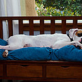Guard Dog by Dennis Reagan