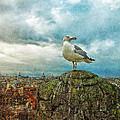 Gull Over Rome by Jack Zulli
