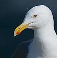 Gull Watcher by Bob Smithing