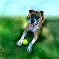 Gus The Rescue Dog by Colleen Taylor