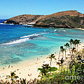 Hanauma Bay with Turtle