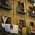 Hanging Out To Dry In Palermo  by Madeline Ellis