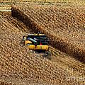 Harvest Time by Eva Kato