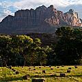 Hay Bales Rockville Utah by Robert Ford