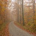 Hazy Forest In Autumn by Matthias Hauser