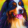 Colorful Bernese Mou...