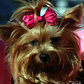 Her Pinkness Print by Steven  Digman