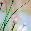 Herb Garden by Kim Fearheiley