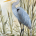 Heron And Cattails by James Williamson