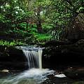 Hidden Rainforest by Kaye Menner