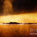 Hippopotamus blowing air at sunrise over misty river Print by Johan Swanepoel