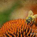 Honey Bee On Flower by Dan Friend