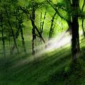 Hope Lights Eternal - A Tranquil Moments Landscape by Dan Carmichael