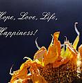 Hope Love Life Happiness
