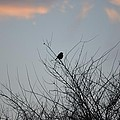 Hope Perched  Atop by Sonali Gangane