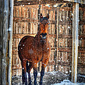 Horse And Snow Storm by Dan Friend