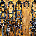 Horse Bridles Hanging In Stable by Elena Elisseeva